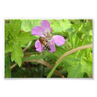 Korean Pollinator Photo Print