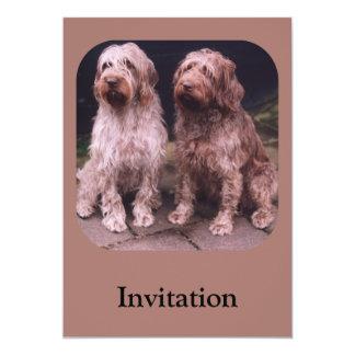 Korthals Griffon - presentación de Tsjip y de Invitación 12,7 X 17,8 Cm