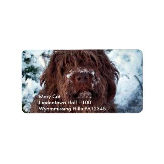 Korthals Griffon - Snowy Sarah Address Label
