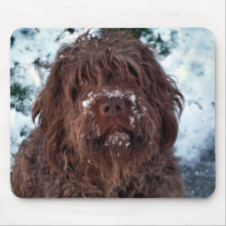 Korthals Griffon - Snowy Sarah Mouse Pad