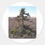 kotz shrub in alaska round stickers