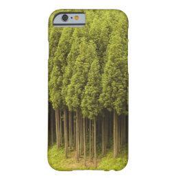Koya Sugi Cedar Trees Barely There iPhone 6 Case
