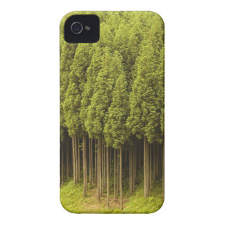 Koya Sugi Cedar Trees iPhone 4 Case