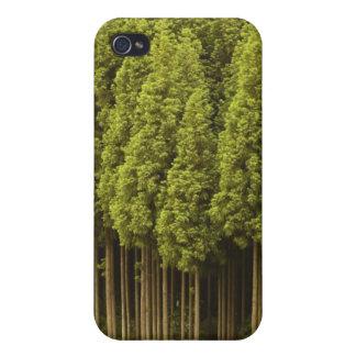 Koya Sugi Cedar Trees iPhone 4 Cover