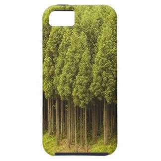 Koya Sugi Cedar Trees iPhone SE/5/5s Case