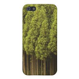Koya Sugi Cedar Trees iPhone SE/5/5s Cover