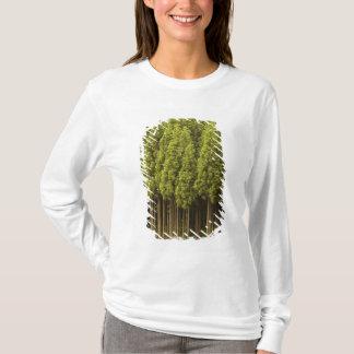 Koya Sugi Cedar Trees T-Shirt