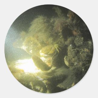 krab en botervisje1 classic round sticker