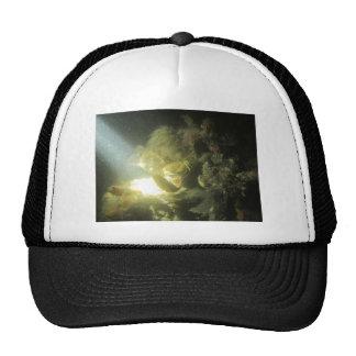 krab en botervisje1 hats