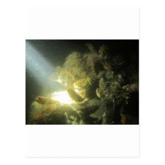 krab en botervisje1 postcard