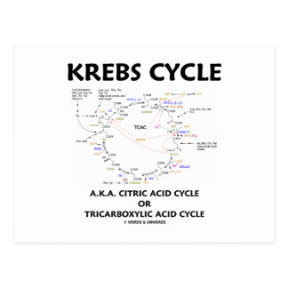 Krebs Cycle A.K.A. Citric Acid Cycle Tricarboxylic Postcard