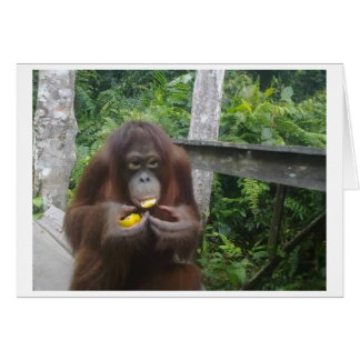 Krista Orangutan Eats Oranges at Recess Card