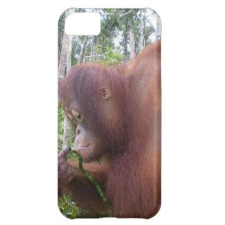 Krista Orangutan in Borneo Rainforest iPhone 5C Cover