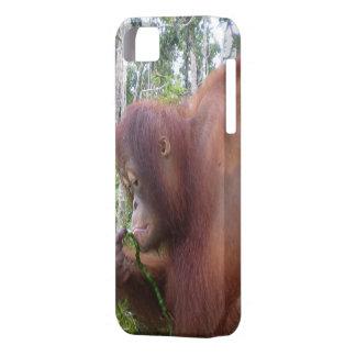 Krista Orangutan in Borneo Rainforest iPhone SE/5/5s Case