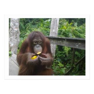 Krista Orangutan in Rainforest of Borneo Postcard