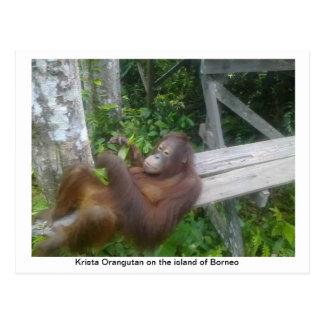 Krista Orangutan Spa Day Postcard