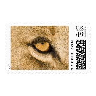 Kruger National Park, Limpopo Province Postage