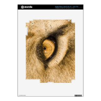 Kruger National Park, Limpopo Province Skin For iPad 3