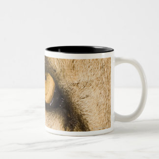Kruger National Park, Limpopo Province Two-Tone Coffee Mug