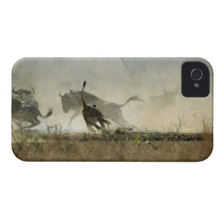 Kruger National Park, Mpumalanga Province, South 3 iPhone 4 Covers