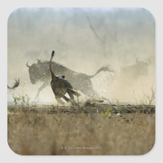 Kruger National Park, Mpumalanga Province, South 3 Square Sticker