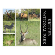 kruger national park postcard