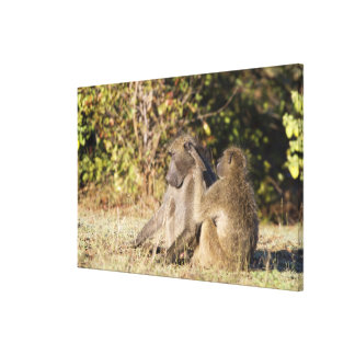 Kruger National Park, South Africa Canvas Print