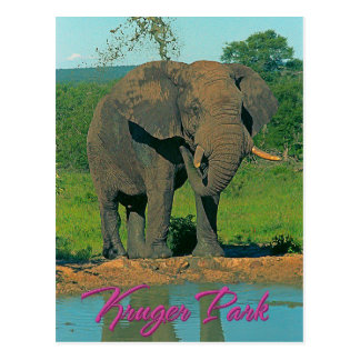 Kruger park, South Africa Postcard