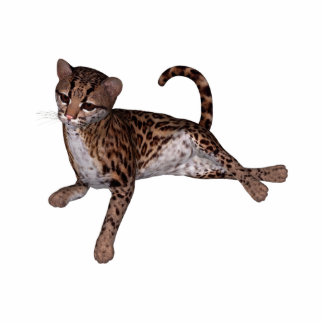KRW Baby Leopard Magnet
