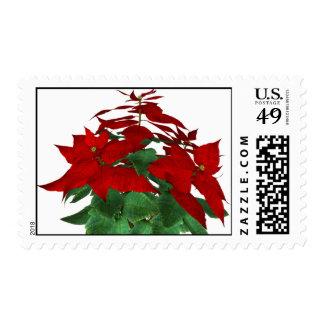 KRW Pointsettia Holiday Stamp