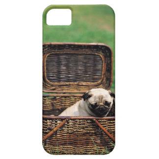 KRW Pug Puppy iPhone 5 Case