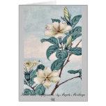 Kuchi nashi - cape jasmine / by Megata Morikaga Uk Cards