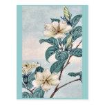 Kuchi nashi - cape jasmine / by Megata Morikaga Uk Post Cards