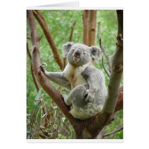 Kuddly Koala Greeting Cards