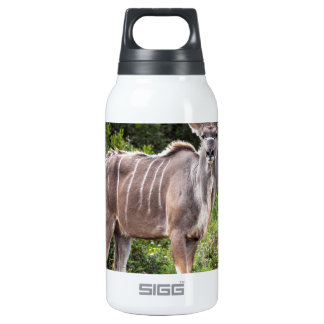 Kudu. 10 Oz Insulated SIGG Thermos Water Bottle