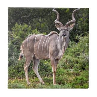 Kudu. Teja Ceramica