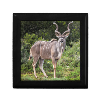Kudu. Cajas De Regalo