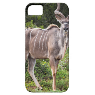 Kudu. Case For The iPhone 5