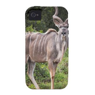 Kudu. iPhone 4 Covers