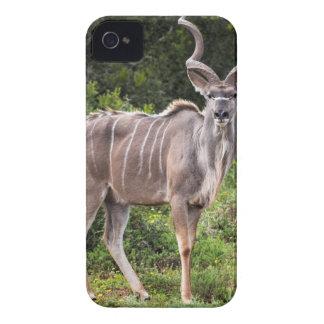 Kudu. iPhone 4 Case