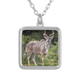 Kudu. Joyerias