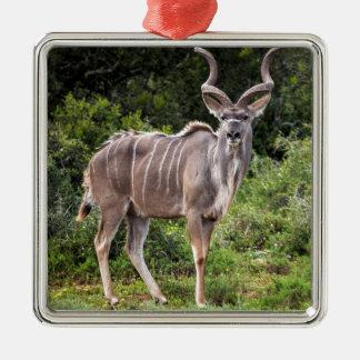 Kudu. Adorno Cuadrado Plateado