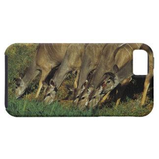 Kudu drinking , Chobe National Park , Botswana iPhone 5 Cases