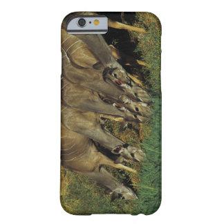 Kudu drinking , Chobe National Park , Botswana Barely There iPhone 6 Case