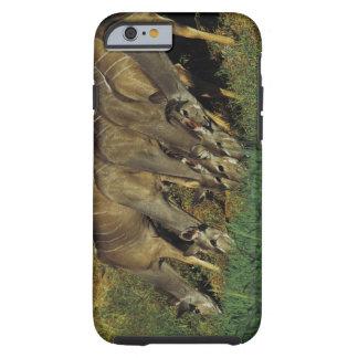 Kudu drinking , Chobe National Park , Botswana Tough iPhone 6 Case