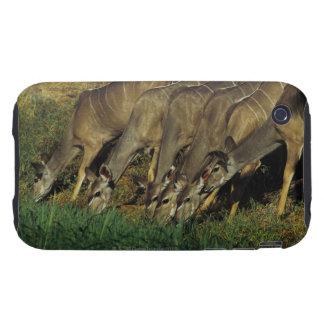 Kudu drinking , Chobe National Park , Botswana iPhone 3 Tough Cover