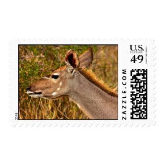 Kudu Female - Postage Stamp