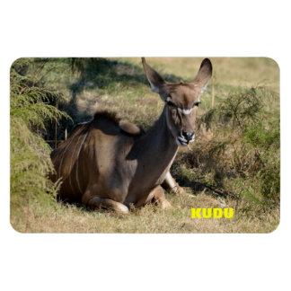 Kudu femenino imán rectangular
