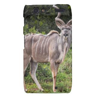 Kudu. Motorola Droid RAZR Carcasas