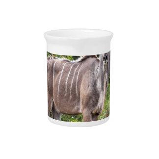Kudu. Jarra